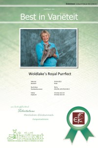 Woldlake's Royal Purrfect wordt opnieuw BIV